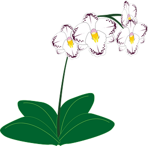 White Orchids clipart