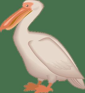 Pelican clipart