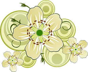 White Flowers of Blackthorn clipart