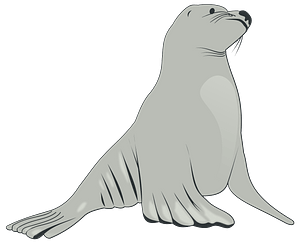 Gray Sea Lion clipart