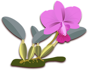 Pink flowering plant clipart