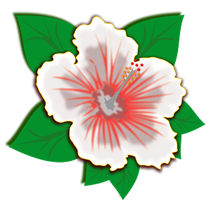 White hibiscus flower clipart