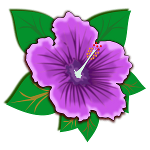 Purple Hawaiian hibiscus flower clipart