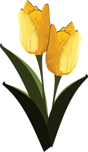 Yellow tulips with stems clipart