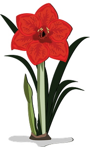 Red lily flower with stem clipart