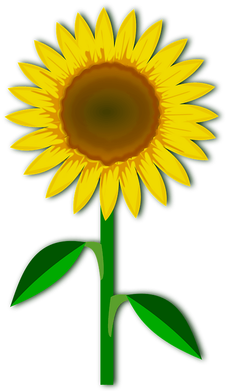 One large yellow sunflower with stem clipart