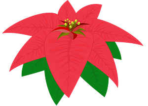 One red poinsettia flower clipart