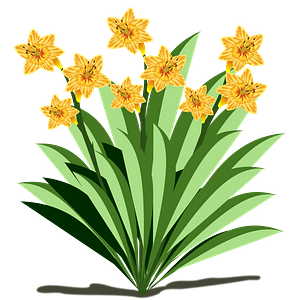 Yellow narcissus flowers and stems clipart