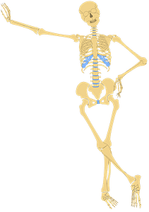 Human skeleton leaning against the wall clipart