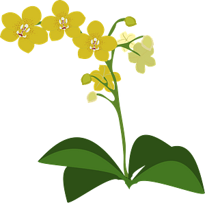 Yellow moth orchid clipart
