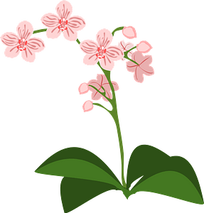 Pink moth orchid clipart
