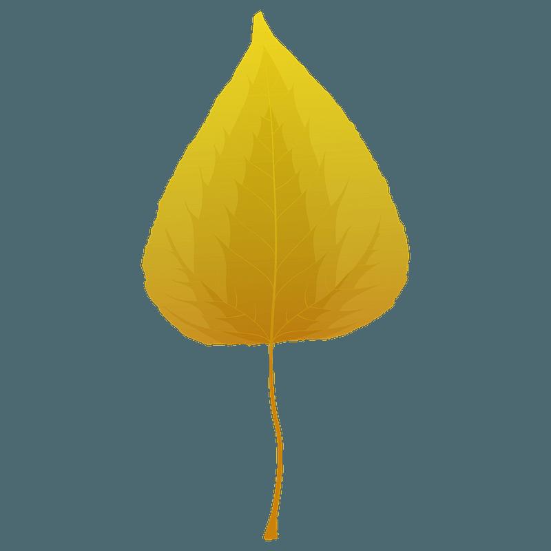 Balsam poplar autumn leaf clipart