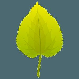Black mulberry summer leaf clipart