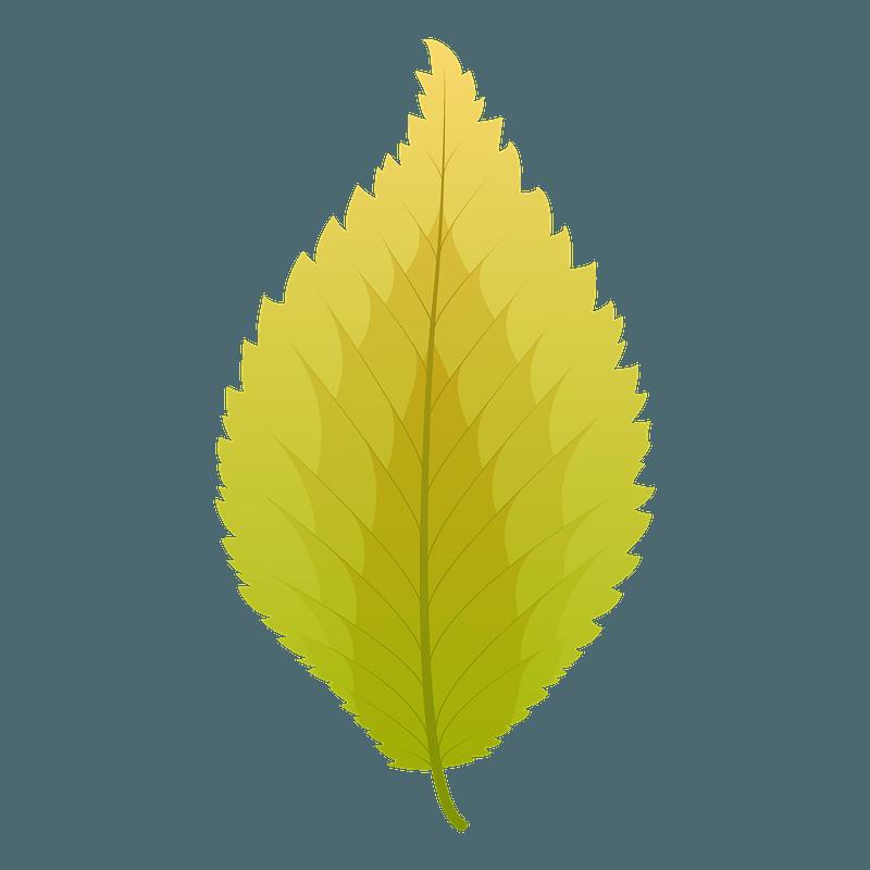 Dutch elm autumn leaf clipart