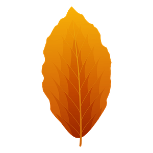 European beech autumn leaf clipart