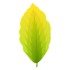 European beech summer leaf clipart