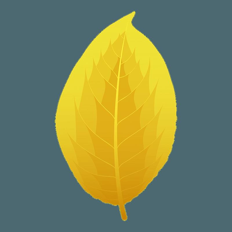 Goat willow autumn leaf clipart