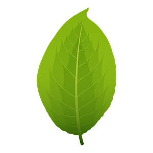 Goat willow spring leaf clipart