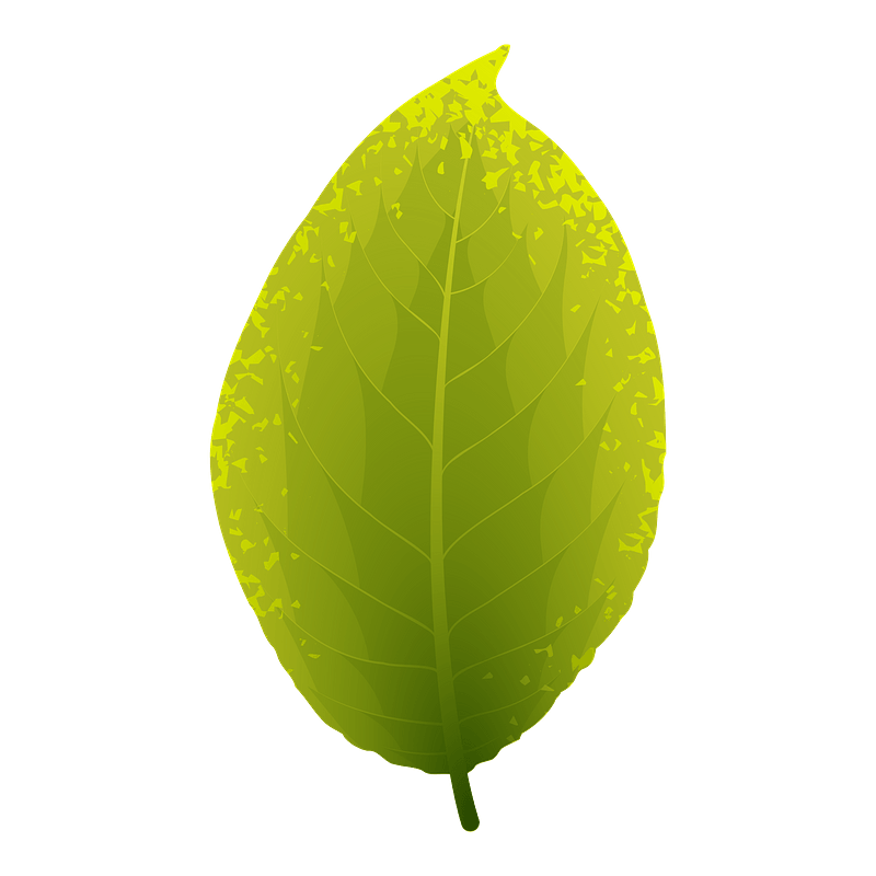 Goat willow summer leaf clipart