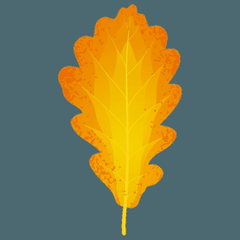 Sessile oak autumn leaf clipart