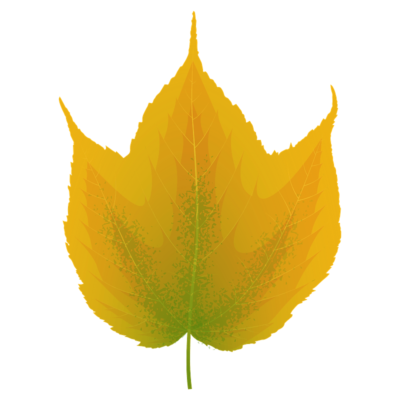 Striped maple yellow leaf clipart