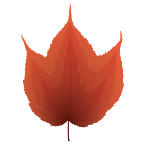 Striped maple red leaf clipart