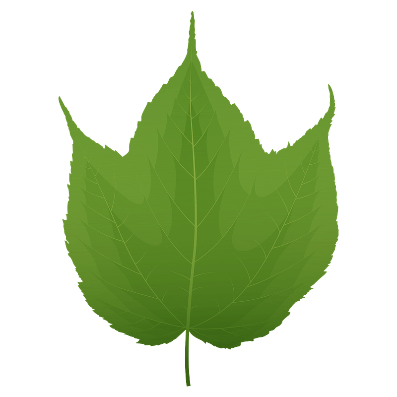 Striped maple green leaf clipart