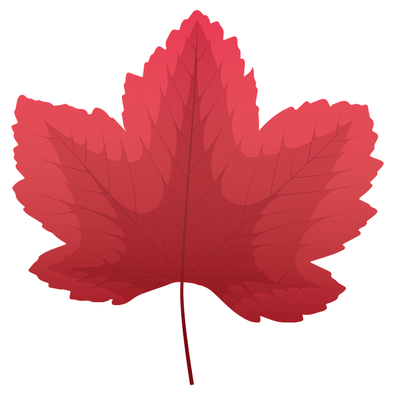 Sycamore maple red leaf clipart