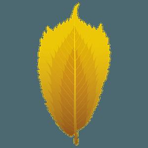 Wych elm autumn leaf clipart
