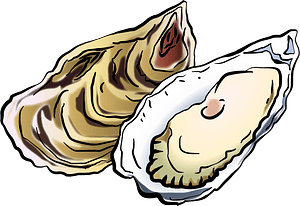 Oysters clipart