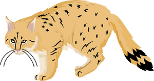 Chinese mountain cat clipart