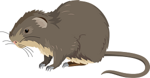 Greater cane rat clipart
