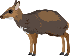 Philippine mouse-deer clipart