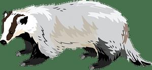 Asian badger кліпарт