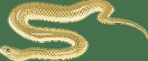 Beaked sea snake кліпарт