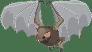Hairy-legged vampire bat кліпарт