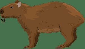 Lesser capybara кліпарт