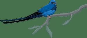 Blue swallow кліпарт