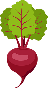 Beetroot clipart