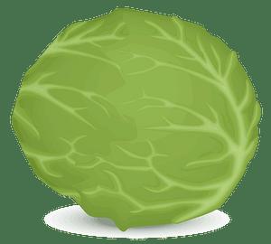 Iceberg lettuce clipart