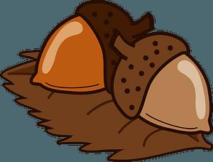 Acorn Autumn clipart