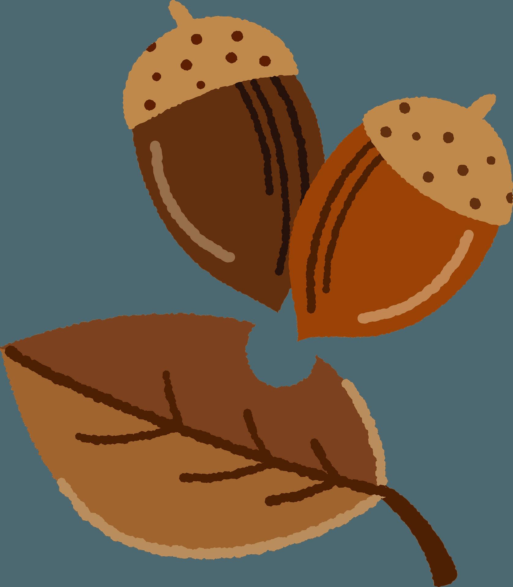 Acorn Clip Art 9, - Acorns Clip Art - Free Transparent PNG Clipart Images  Download