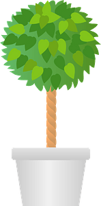Benjamin Fig Tree in a White Pot clipart