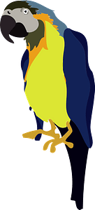 Blue and Yellow Macaw clipart