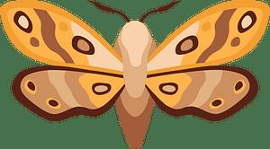 Moth clipart