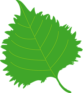 Shiso Herb Leaf clipart
