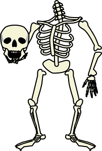 Skeleton Holding Skull clipart