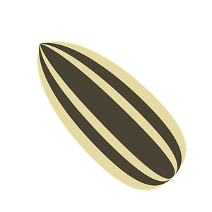 Sunflower Seed clipart