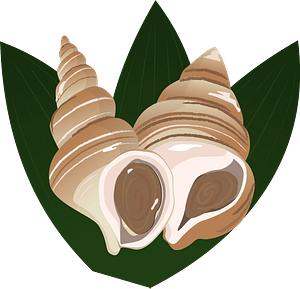 Whelk Food clipart