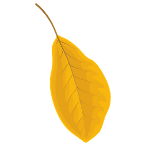 Black tupelo autumn leaf clipart